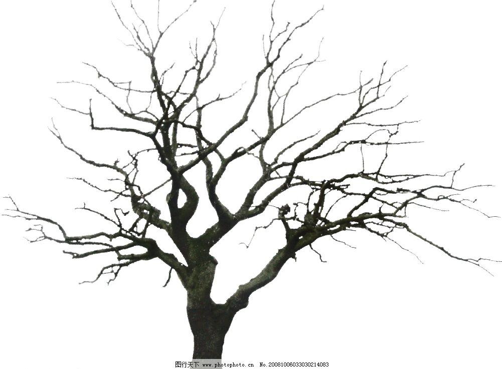 枯树 植物 树木 景观 psd分层素材 源文件库 72dpi psd