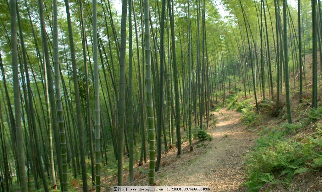 竹林 平面素材 自然景观 自然风景 摄影图库 200dpi jpg