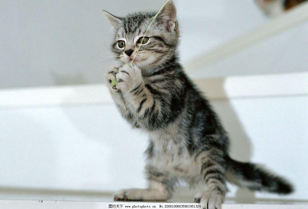 动物 猫咪 哺乳动物 可爱 漂亮 花纹 调皮 站立 鸟类 漂亮的动物