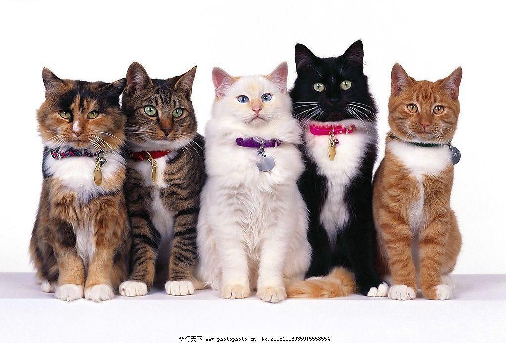 动物 猫咪图片