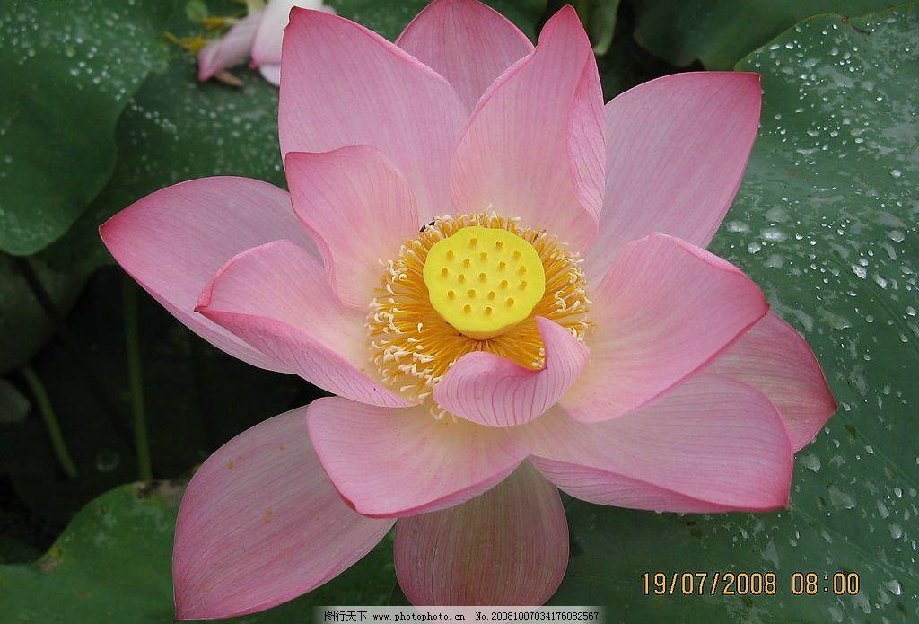 广昌莲花节 旅游摄影 自然风景 旅游风景 摄影图库