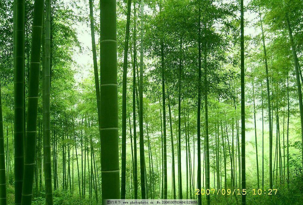 竹子 竹林 自然景观 自然风景 摄影图库 72dpi jpg