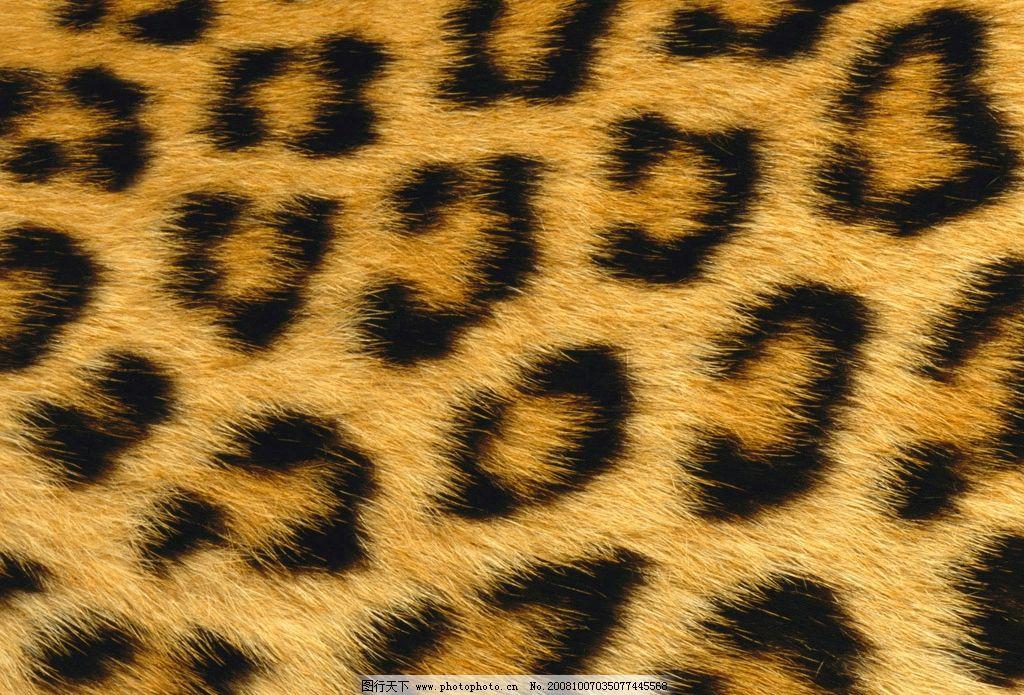 豹纹底图图片