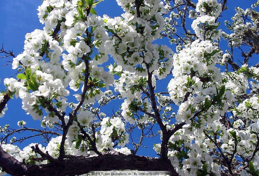海东民和梨花风景园