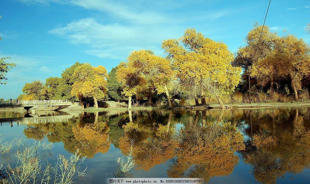 敦煌 美丽的胡杨树 旅游摄影 国内旅游 风景 摄影图库 96dpi jpg