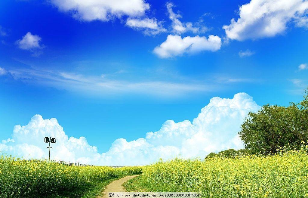 野外风光 风景 景色 蓝天 白云 大树 绿草 摄影图库