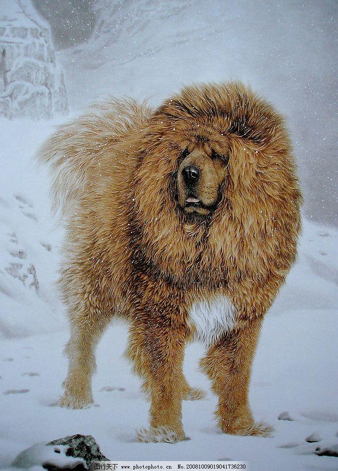 动物世界 瑞雪藏獒 飘雪纷纷 文化艺术 美术绘画 生物世界 野生动物