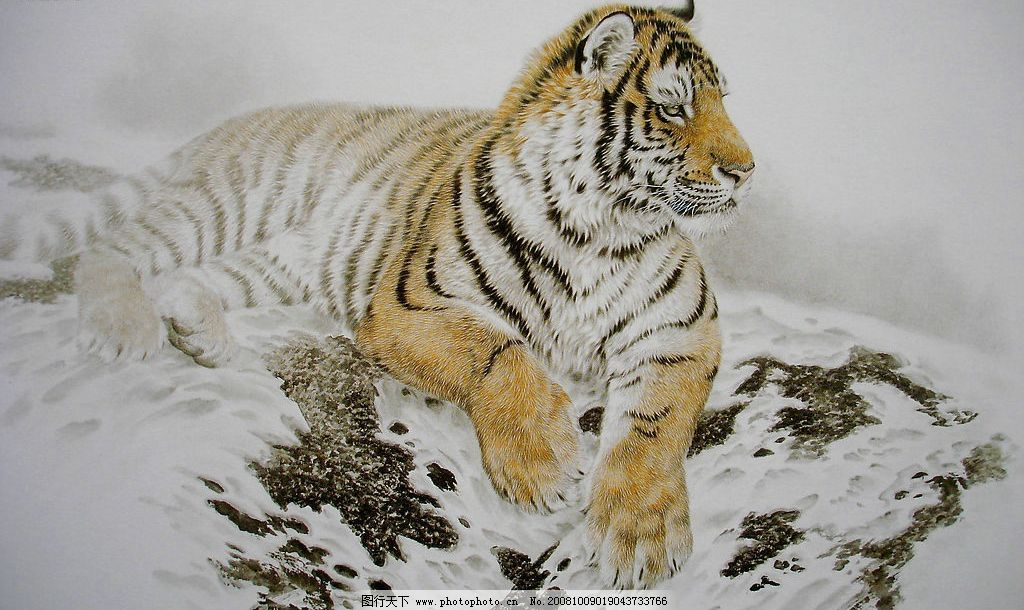 工笔画 动物世界 卧虎 瑞雪雄风 美术绘画