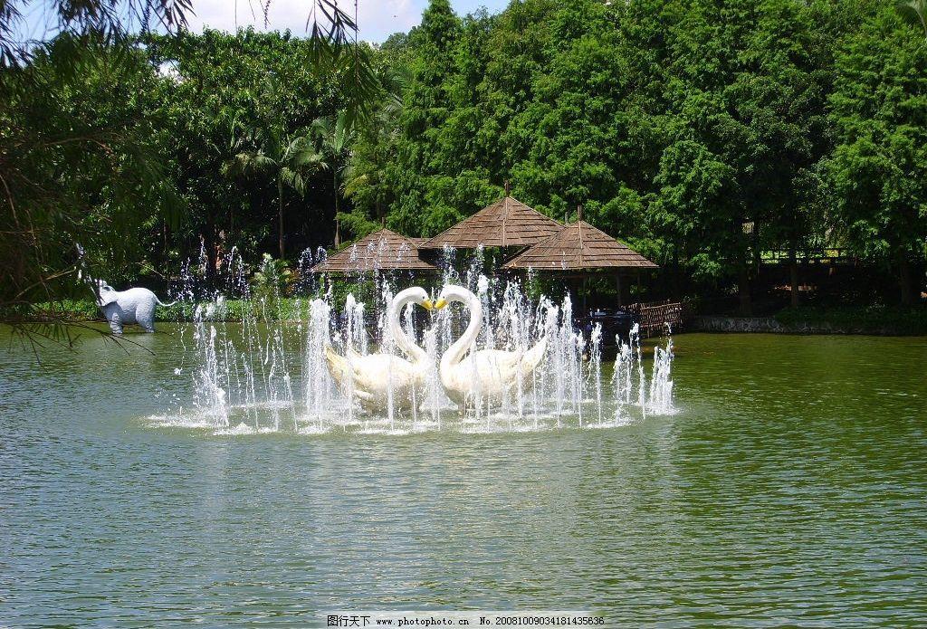 天鹅湖 深圳野生动物园之天鹅湖 旅游摄影 景观 摄影图库