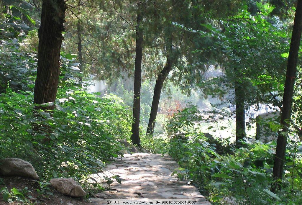 泰山景观 石径 柏树 山林 自然景观 风景名胜 摄影图库 180dpi jpg