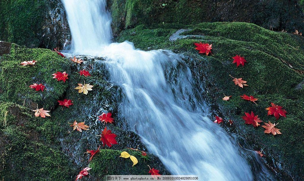 瀑布与枫叶 瀑布 枫叶 自然风景 自然风光 景色 自然景观 摄影图库