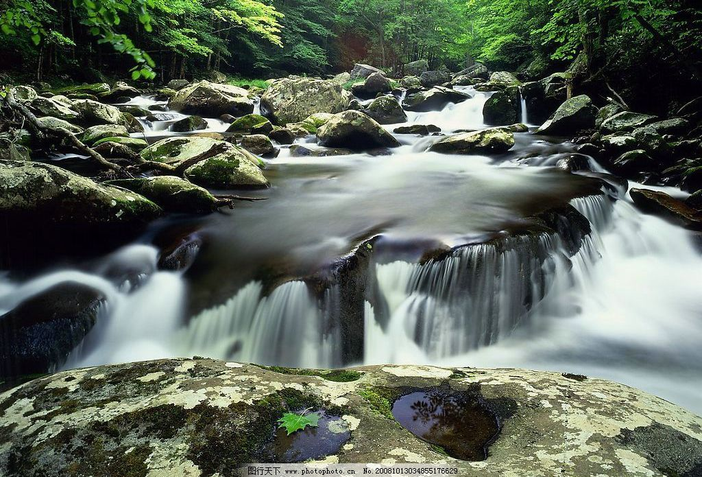森林流水 森林 流水 石头 自然景观 自然风景 摄影图库 72dpi jpg