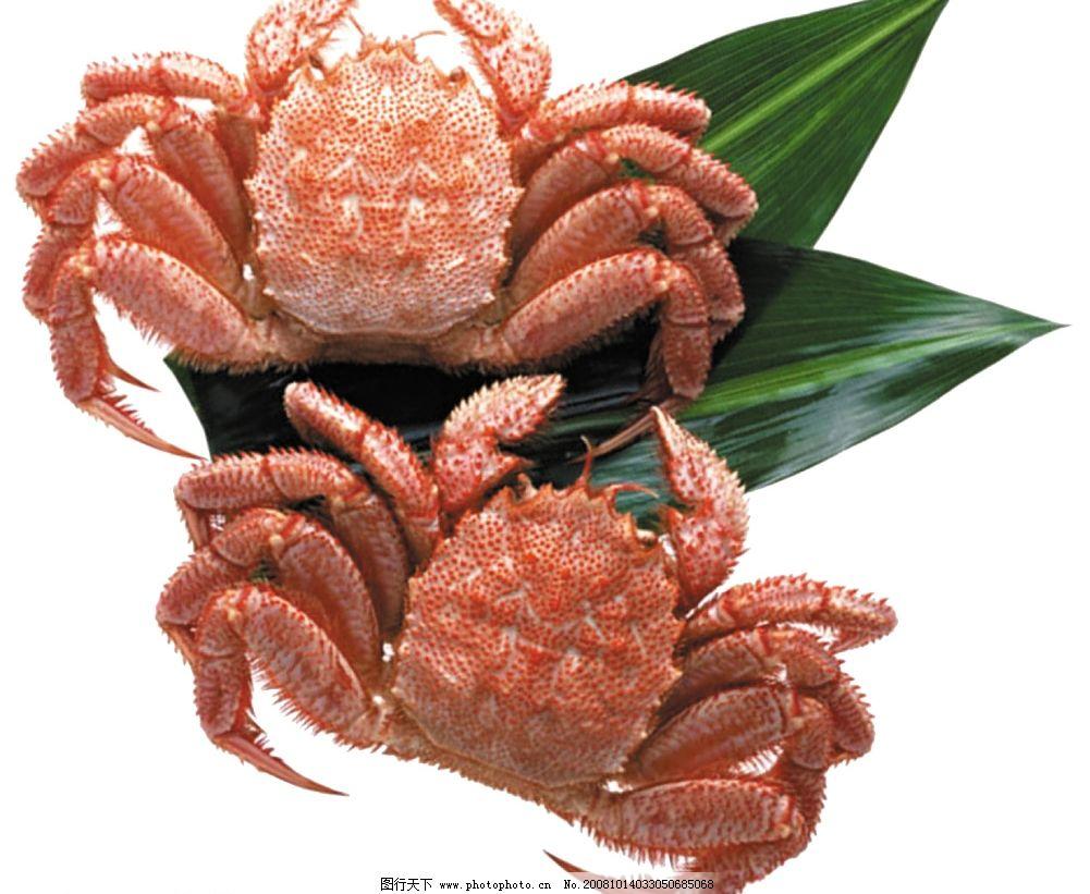 螃蟹 海产品 海鲜 源文件库