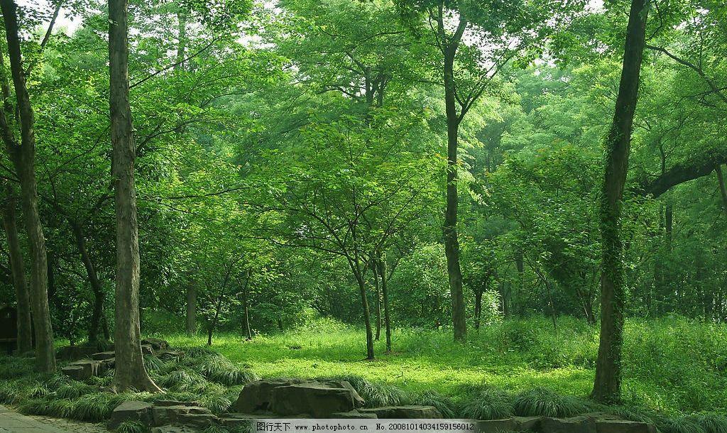 树林 自然风景 旅游摄影 摄影图库 72dpi jpg