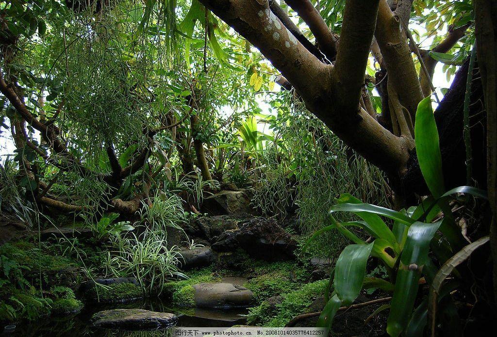 丛林 森林 树林 藤蔓 热带雨林 草 树木 林荫 清泉 争奇斗妍