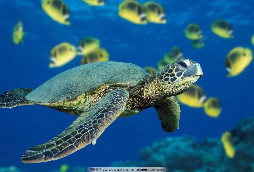 海底世界乌龟简笔画彩色