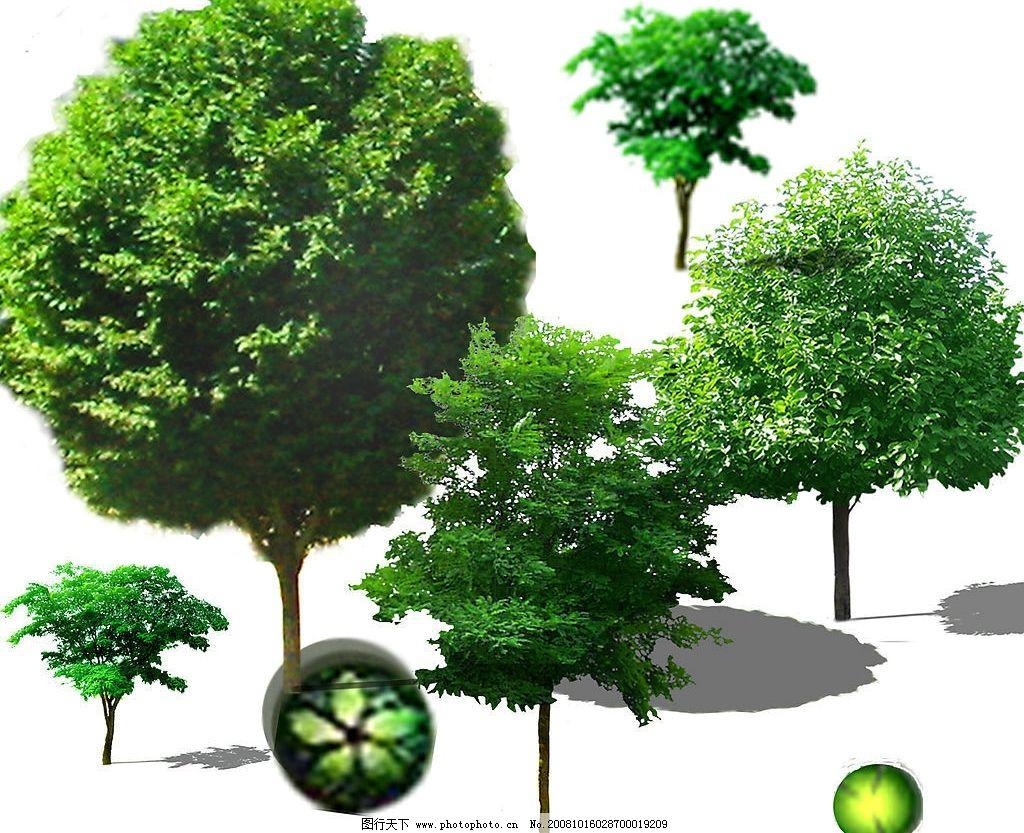 植物素材 园林 素材 立面树 环境设计 园林设计 源文件库 118dpi psd