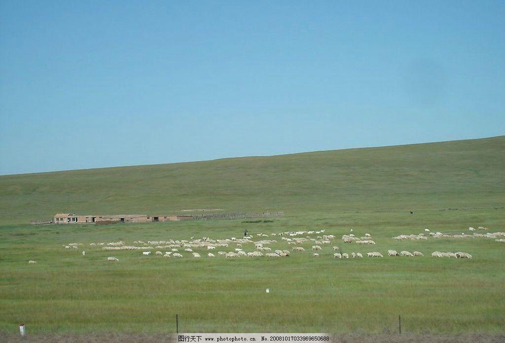 草原羊 草原 羊 旅游摄影