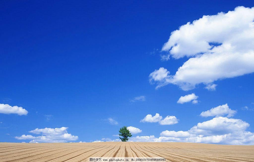 麦田收获 蓝天 白云 大树 收获的麦田 大地 沟垄 自然景观 田园风光