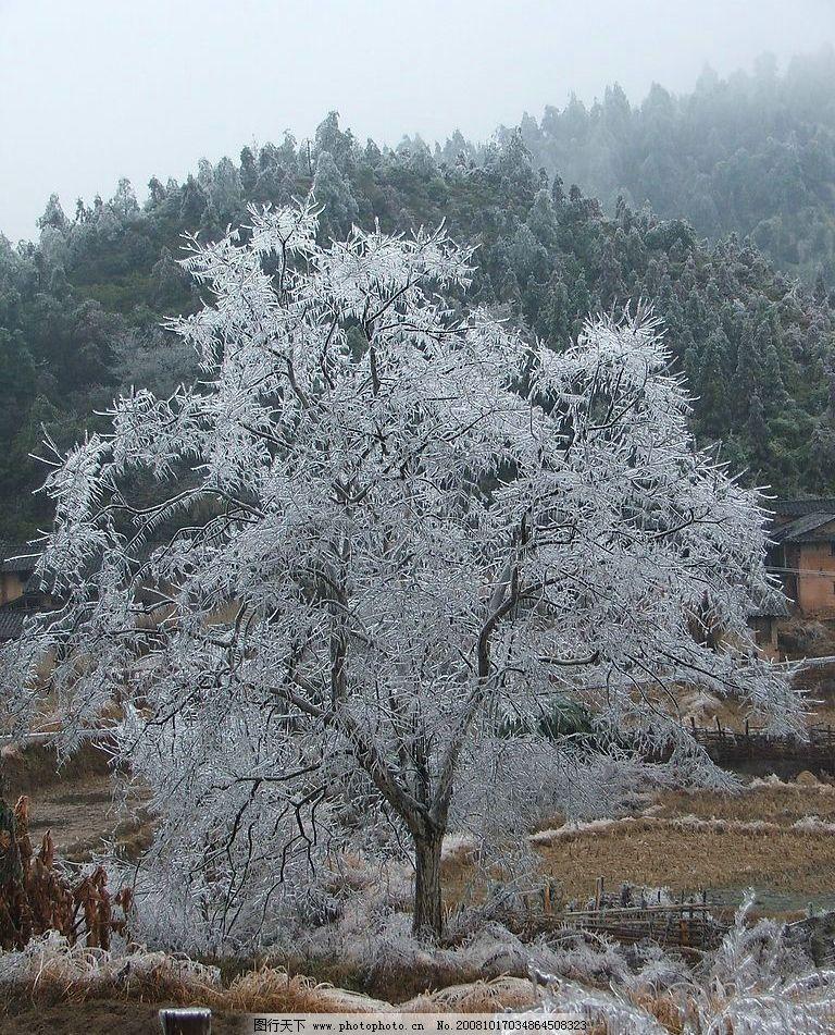 冰花 冬天最美的花 自然景观 自然风景 雪花 摄影图库 72dpi jpg