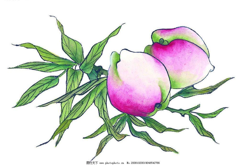 桃子 果树 国画 艺术 文化艺术 绘画书法 素材 设计图库 72dpi jpg