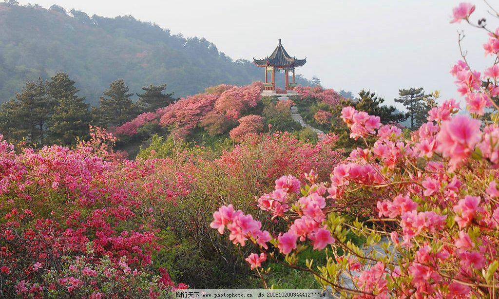 杜鹃花 自然景观 山水风景 摄影图库 300dpi jpg