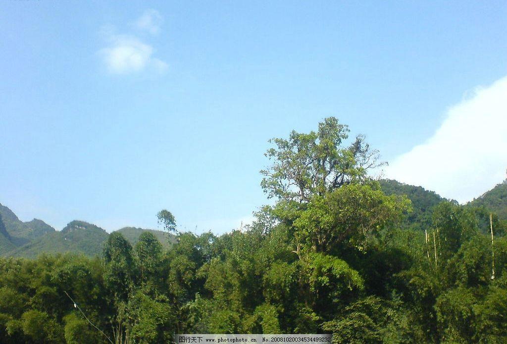 蓝天绿树图片