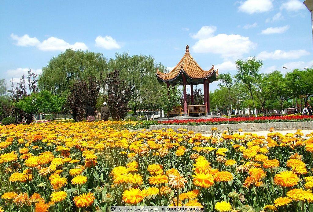 花园 公园 滦县 新城 花 树 蓝天 亭子 蓝天白云 自然景观 自然风景