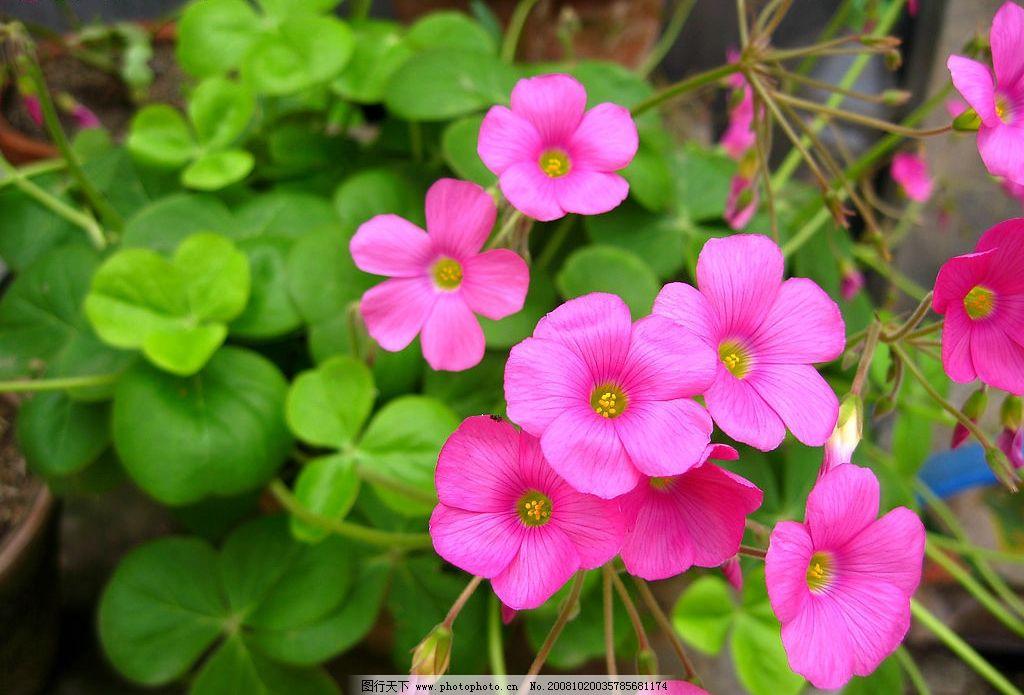 红花绿叶 红花 绿叶 叶子 花朵 花瓣 幽雅 自然 生物世界 花草 摄影