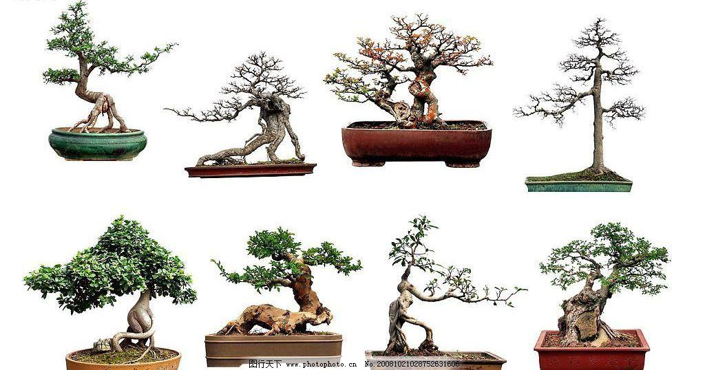 盆景 盆栽 园林 植物 环境设计 园林设计 源文件库 254dpi psd