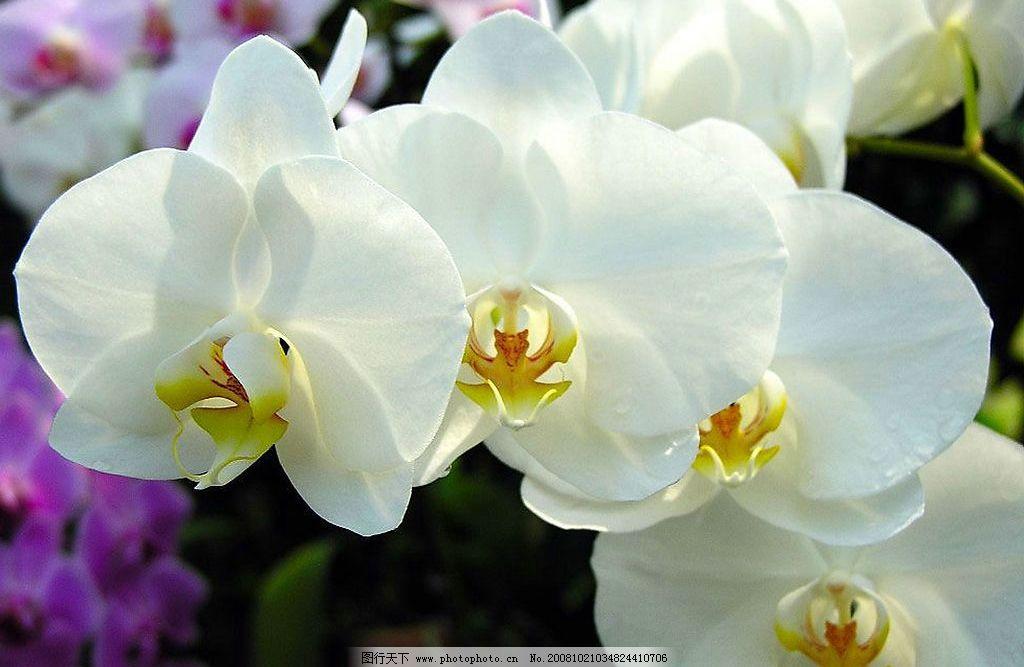 兰花 叶子 花 自然景观 自然风景 摄影图库 300dpi jpg