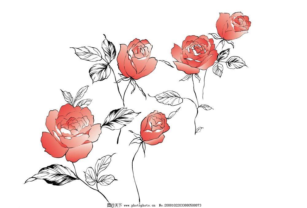 矢量玫瑰 玫瑰 红玫瑰 线条 红花 玫瑰花 矢量图 黑色 ai素材 矢量