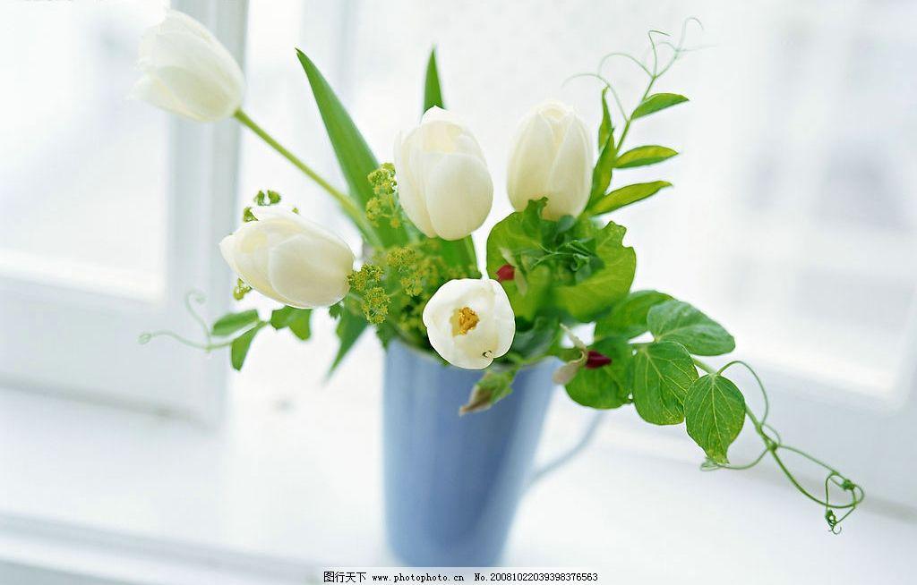 鲜花装饰图片_室内摄影