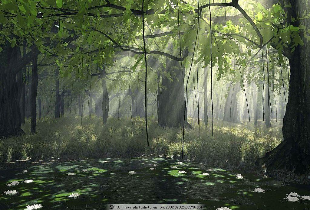 森林阳光 森林 阳光 花 草 景观 唯美 美丽 自然景观 自然风光 设计