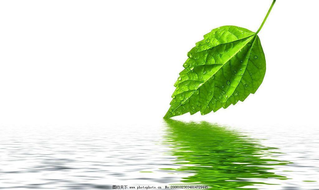 树叶 风景 风光 水 倒影 绿色 自然 自然景观 自然风景 摄影图库 300