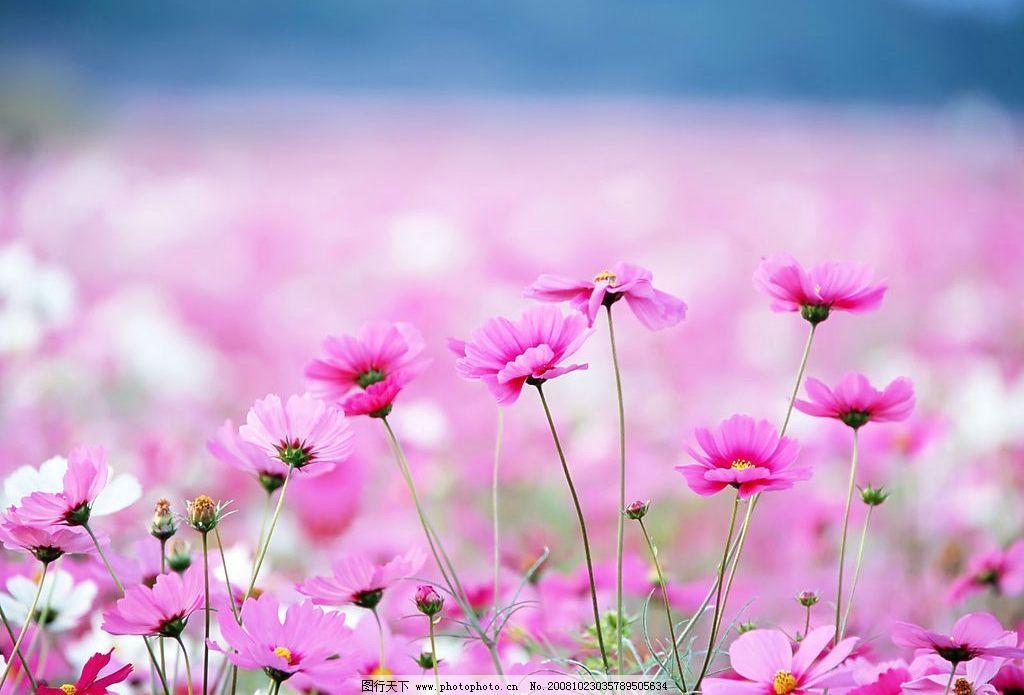 野花 花草 花朵 蓝天 白云 阳光 小草 自然景观 自然风景 摄影图库