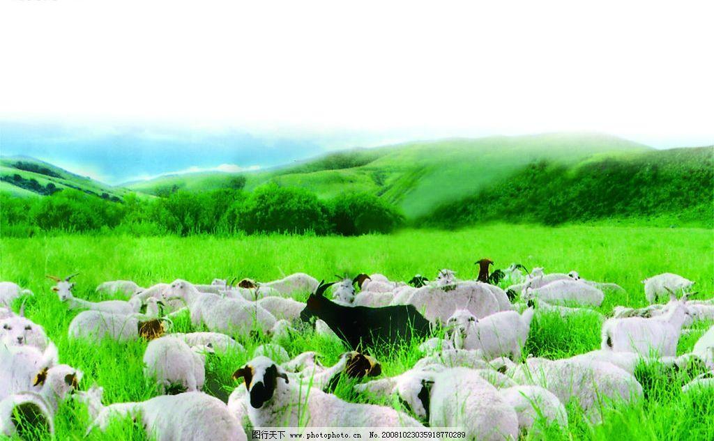基督教歌曲羔羊在路上歌谱