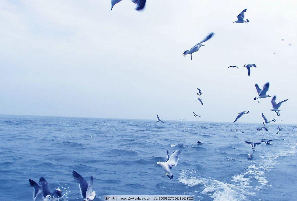 长岛风光 天空 大海 海水 海鸥 旅游摄影 自然风景 摄影图库
