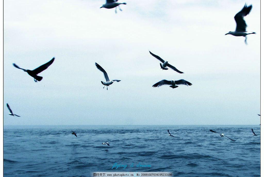 长岛风景 天空 海水 海鸥 大海 旅游摄影 自然风景 摄影图库