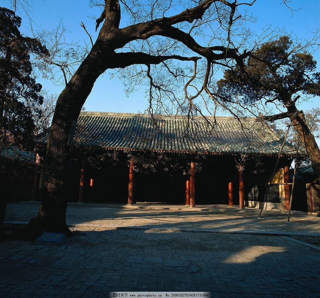 古代建筑 古代 房子 院子 枯树 梯子 砖块 蓝天 旅游摄影 人文景观