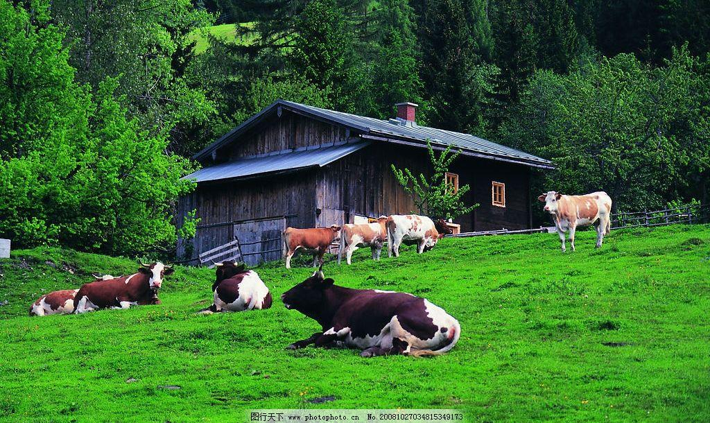 山坡 奶牛 树 房子 草坪 自然景观 自然风景 摄影图库 72dpi jpg