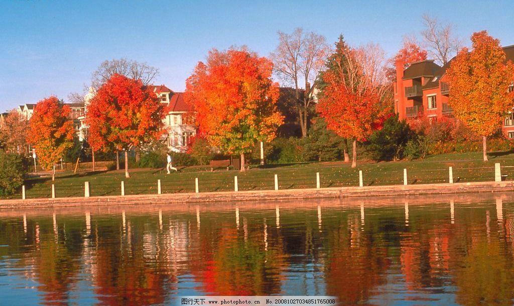 风景 秋天 小河 河边 树木 枫树 枫叶 房子 小区 早晨 素材 自然景观
