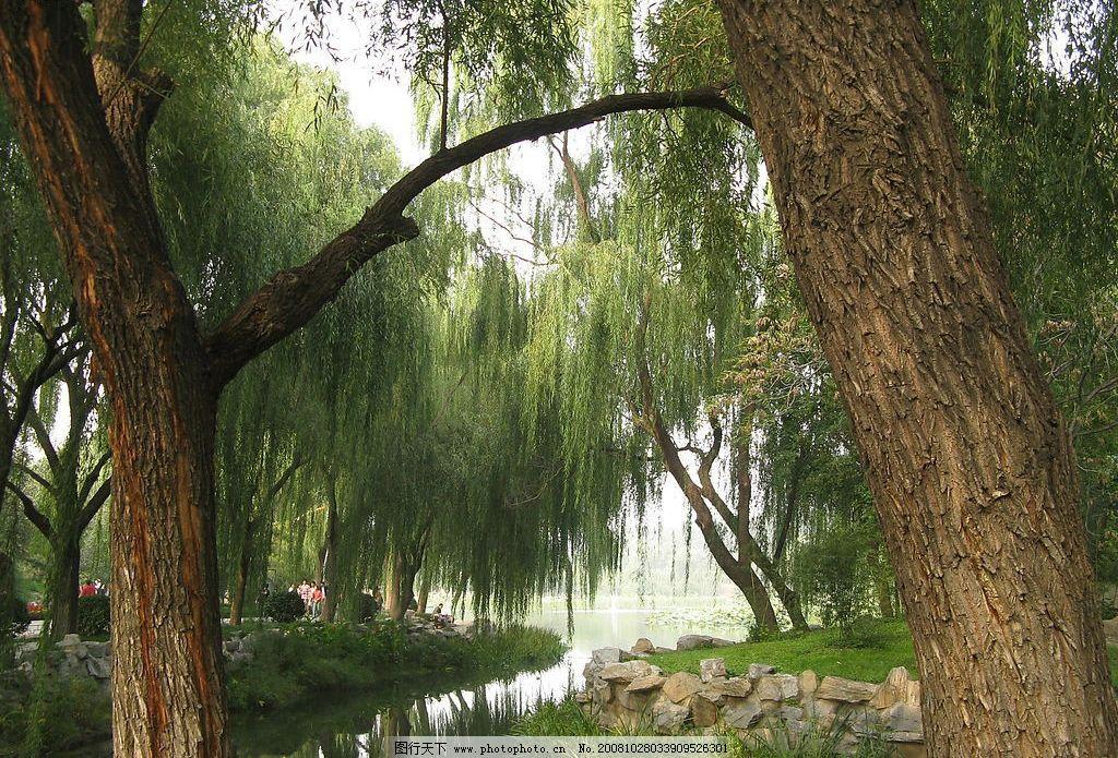 优美风景 河边柳树 旅游摄影 国内旅游 外景 摄影图库