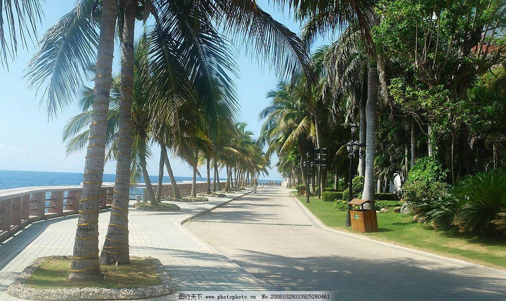 椰林小道 海南 三亚 旅游摄影 国内旅游 摄影图库 72dpi jpg