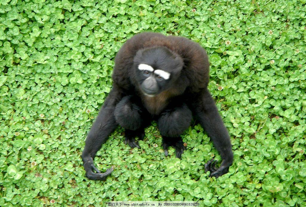 绿叶中的狒狒 保护区 荣成 动物 可爱 表情 自然 荣成景色 摄影图库