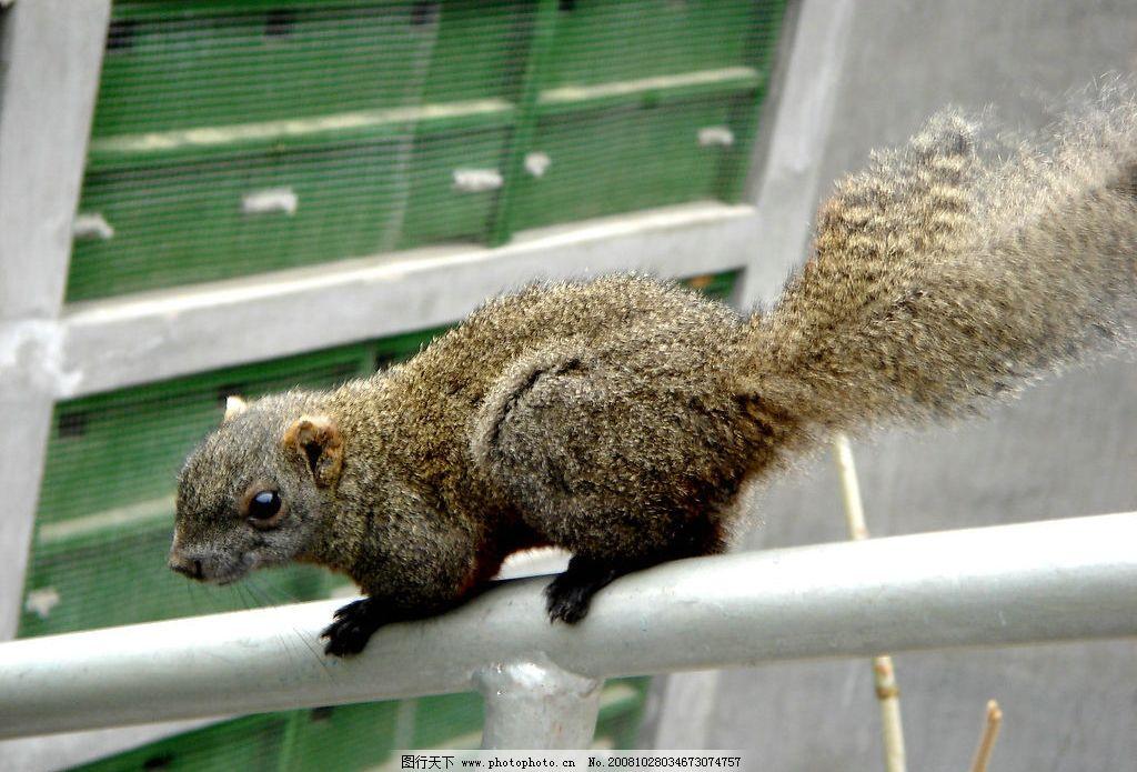 调皮的松鼠 保护区 荣成 动物 可爱 灵动 自然 荣成景色 摄影图库