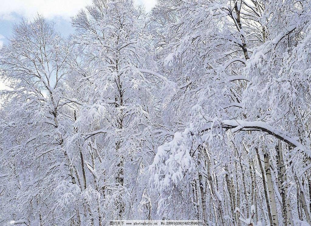 大雪迷漫 大雪 自然景观 自然风景 摄影图库 72dpi jpg
