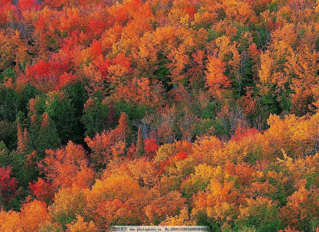 丛林 树林 自然景观 自然风景 摄影图库 72dpi jpg