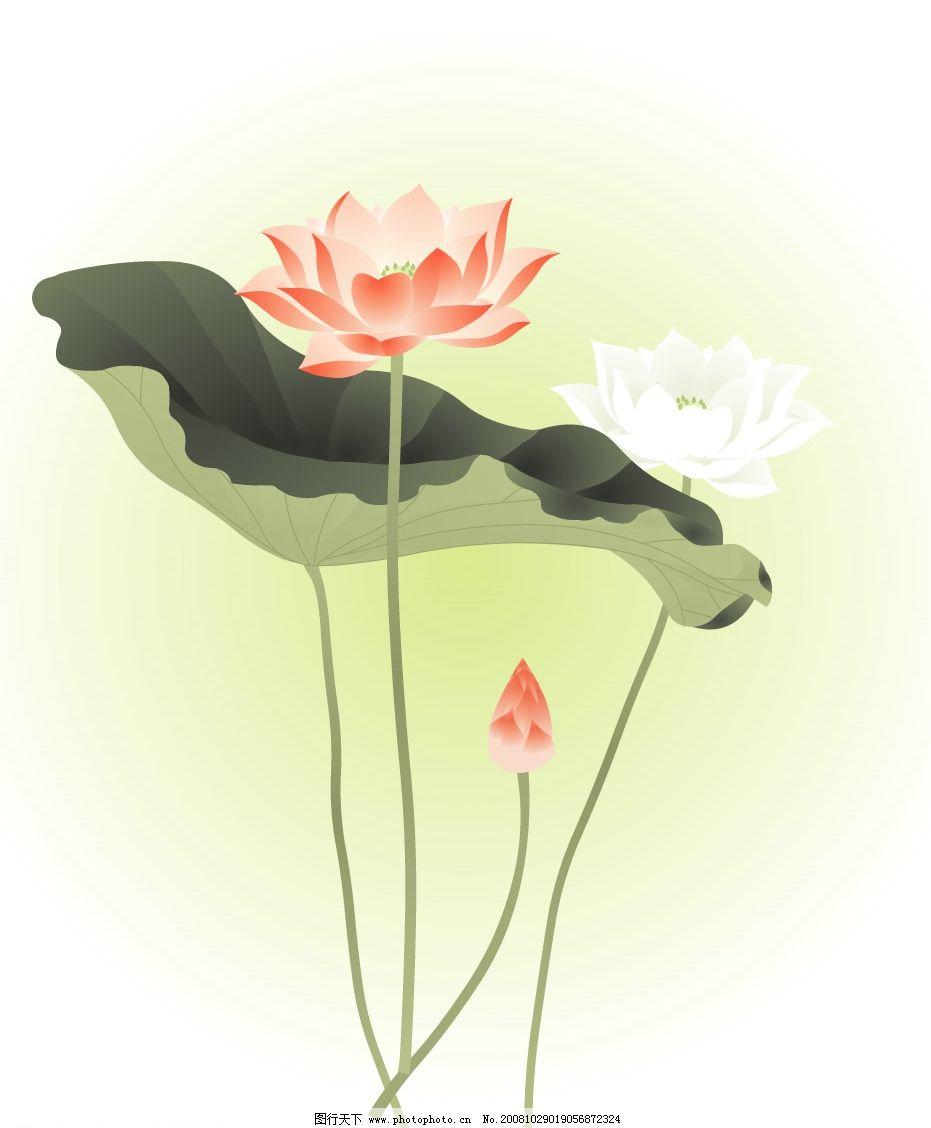 荷花 荷叶 文化艺术 美术绘画 矢量图库 ai
