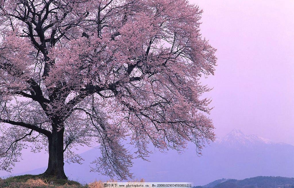 梨树 农村风景 自然景观 田园风光 风景 摄影图库 350dpi jpg